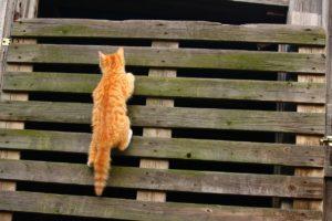 cat is climbing
